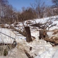 知人の山?の不用木の除去
