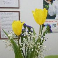 黄色のチューリップとアブチロン(ウキツリボク)