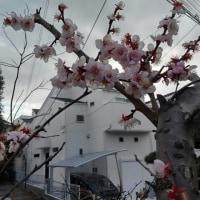 春2番?…♪