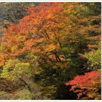 紅葉の五家荘