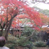 「諸戸徳成邸」特別公開見てきました。