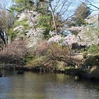 4/23(日)その1 須賀川牡丹園