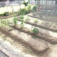 チョットだけ、菜園が