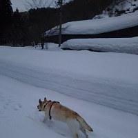 お山は雪いっぱいだった♪