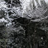 すばらしい雪景色、ということで。日が差してきた。