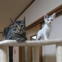 第2回目 譲渡会 & 新しい猫ちゃんたち・・ご紹介&里親さま募集ですぅ(^O^)/