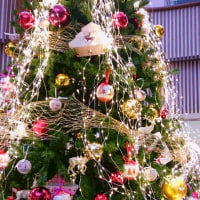 静岡駅ホームから見える紅葉 (オマケ、セノバのクリスマスツリーなど)