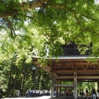鎌倉にて ②