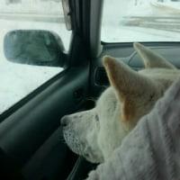 孤高の和犬
