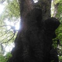 ソロツーリング この木なんの木気になる木?