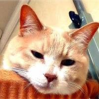 【猫日記こむぎ&だいず】2017.05.015