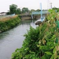 広瀬川から韮川の流れを下る(その2) 三又堰から倭文神社、柴宿…、西善町では田んぼに水が…