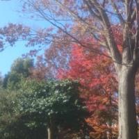 一気に秋になりました。