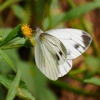 秦野の里山を歩く・蝶たちは冬越しに備える・縞蛇に会う
