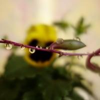 またまた1月の写真教室  水滴写真他の花