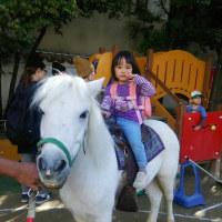 愛ちゃん 馬に乗る~~