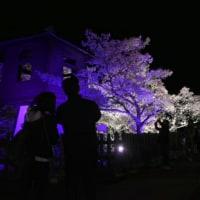 桜終わりました