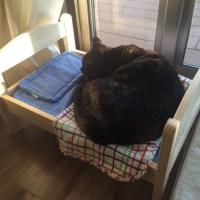 メイがIKEAの猫ベッドに