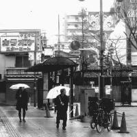 4月の冬雨