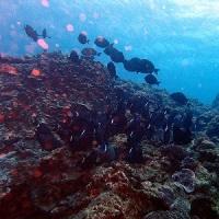 なんて天気だ! 沖縄ダイビング 那覇シーマリン