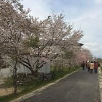 高齢者サロンの皆さんと散歩で花見
