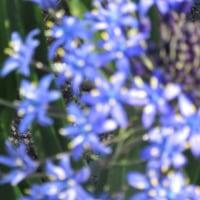 連休後の花