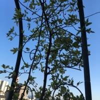 バランス系の立木のポーズは集中力がないと難しいですね。