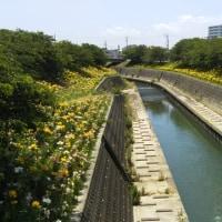 掛川城のユリと十九首塚