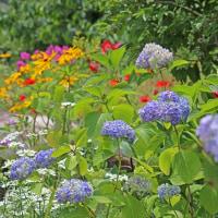 6月下旬の秘密の花園