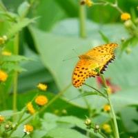 蝶たちの終活…多摩川秋景色シリーズ