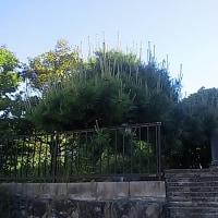 庭木剪定の見積