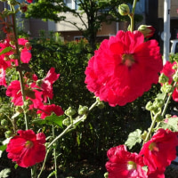 6月の花 溝口四丁目にて(1)