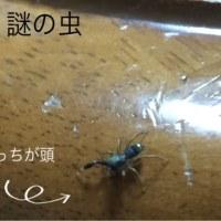この虫は何だろか?