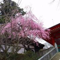 高尾山(その2)