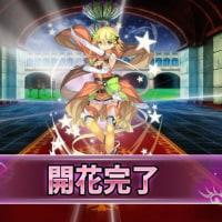 「フラワーナイトガール」 こばと団長の活動記録 その14 イベリスちゃん開花!