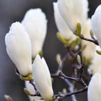 3/27 中庭のお花さん