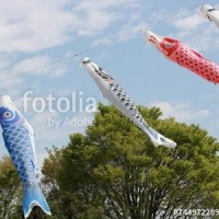 fotolia「菜の花畑の鯉のぼり」 3作品です