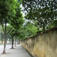 旧タンロン城の奥ゆかしい壁に沿って歩く