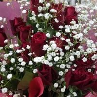 2月27日 明日の誕生花・ゆかりの花 花言葉は?(*^O^*)☆