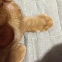 可愛い手と手