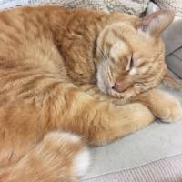 2/22猫の日 cat's sleep