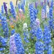 花の撮影「写した写真の整理」どんどん捨てる勇気が上達の基本!