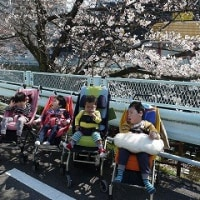 お花見~山崎川~