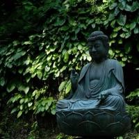東慶寺で岩タバコと岩がらみ撮影!