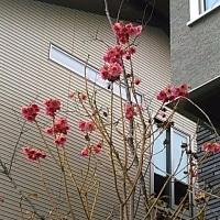 ガーベラのような花が・・・