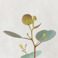 新芽の季節
