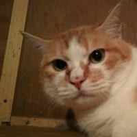 メス猫🐈部屋から、こんばんは🌙