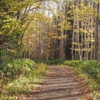 野幌森林公園・秋深し