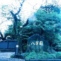 八芳園deお花見イベント