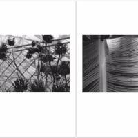 ゴトーマサミ WEB 写真展(242) #Summicron-Straight